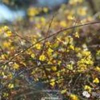 爬毛公山、摘草莓、放风筝,赏花拍照……想怎么嗨都行!