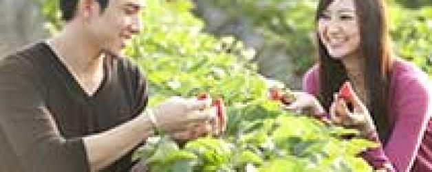 青岛毛公山农业采摘游